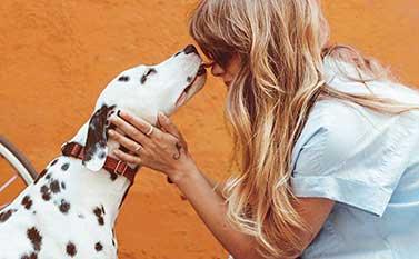 dalmatian licking girl