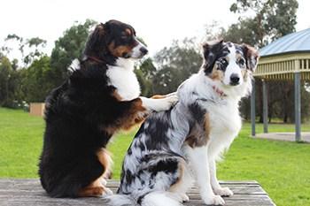 dog massaging another dog